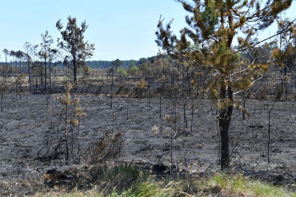 Aftermath of Thursley Fires on vegetation