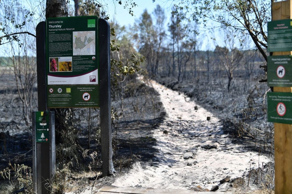 A path in Thursley common affected by the fires