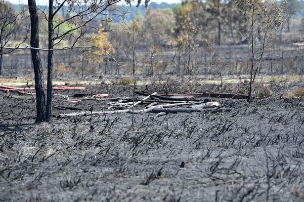 Aftermath of Thursley Fires